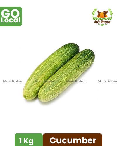 Cucumber Hybrid - काक्रो हाइब्रीड