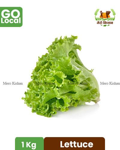 Lettuce - सलाद पत्ता
