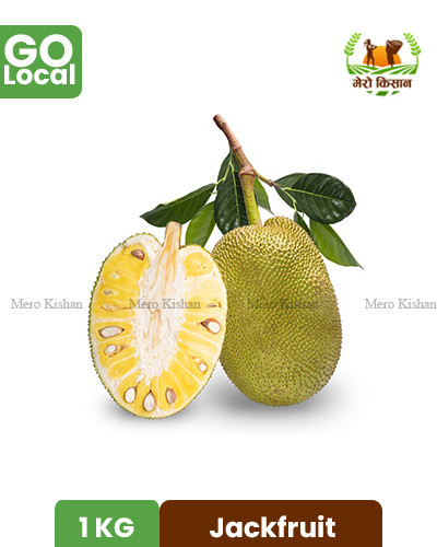 Jackfruit - रूख कटहर